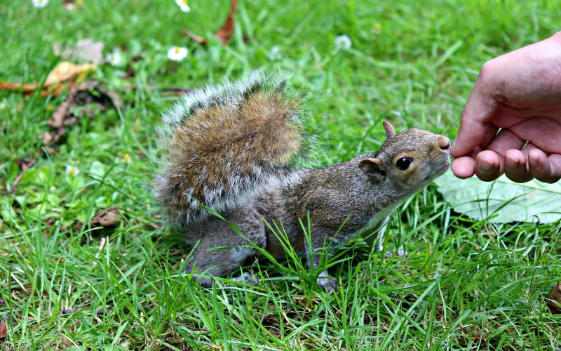 IMG_1079 - Eekhoorn in Kensington Park